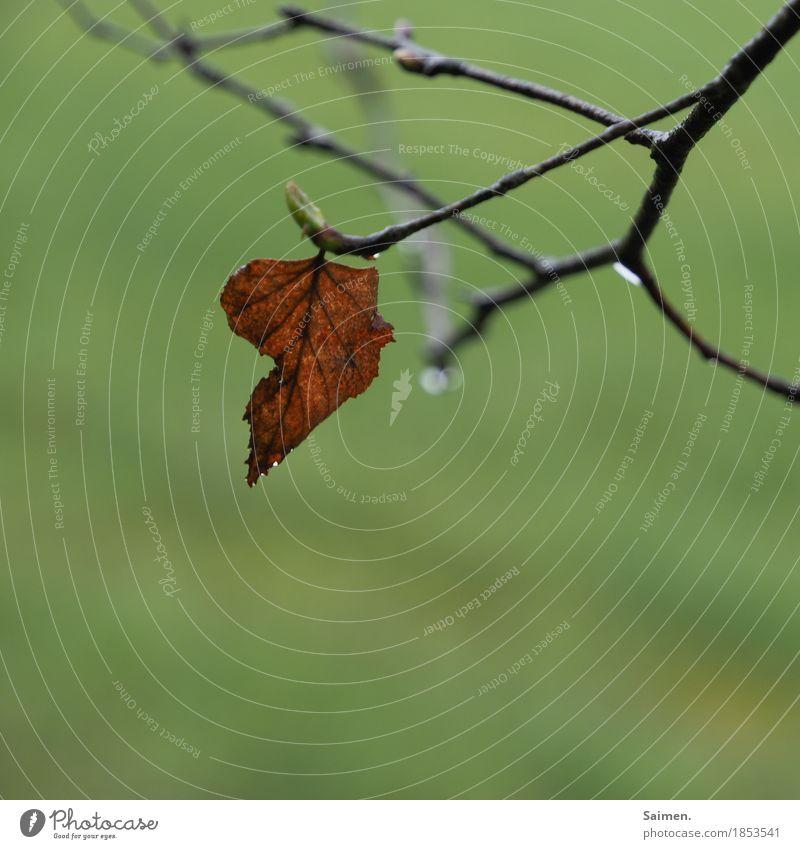 sadness Natur schlechtes Wetter Regen Baum Blatt Wald Traurigkeit Trauer Zweige u. Äste Ast welk Farbfoto Außenaufnahme Detailaufnahme Menschenleer