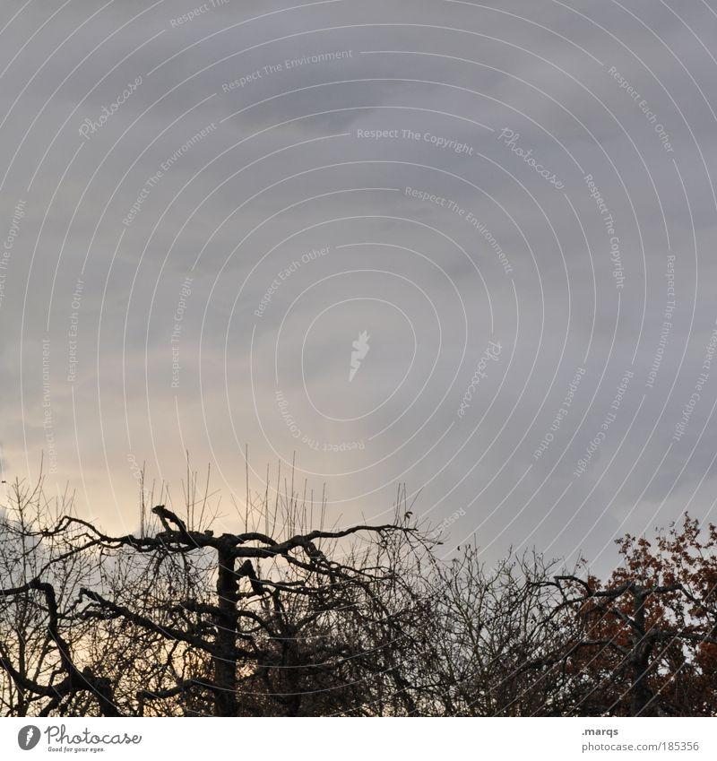 Cut Natur Baum Winter dunkel Herbst Traurigkeit Landschaft Stimmung Wetter Ausflug trist Wandel & Veränderung Klima Vergänglichkeit außergewöhnlich Verfall
