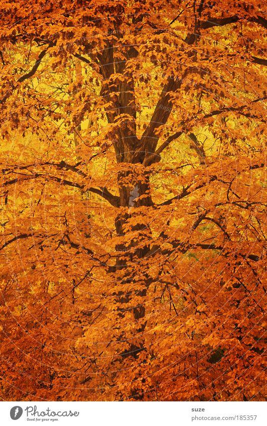Zweigstelle Natur Baum Blatt Umwelt Herbst Gefühle Zeit gold ästhetisch Jahreszeiten Baumstamm Baumkrone Wald Herbstlaub herbstlich mehrfarbig