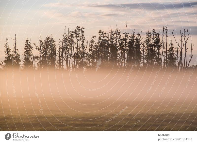 Nebelschwaden Landschaft Erde Herbst Klima Baum Feld grün rosa Mecklenburg-Vorpommern Farbfoto Gedeckte Farben Außenaufnahme Menschenleer Textfreiraum unten