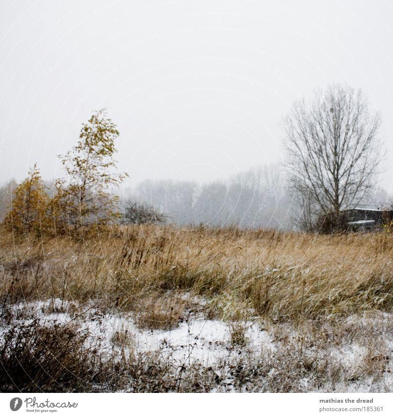 TRÜBSEELIGES SCHNEEGESTÖBER Umwelt Natur Landschaft Himmel Horizont Winter Klima Wetter schlechtes Wetter Wind Eis Frost Schnee Pflanze Baum Gras Sträucher Moos