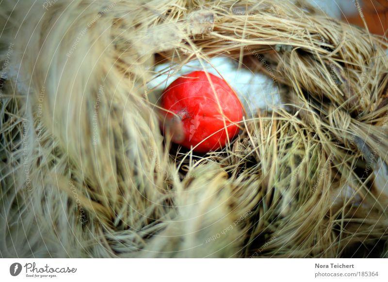 Versteck. Umwelt Natur Landschaft Pflanze Herbst Winter Gras Sträucher Beeren Stroh Heu Park atmen liegen träumen Traurigkeit verblüht dehydrieren ästhetisch
