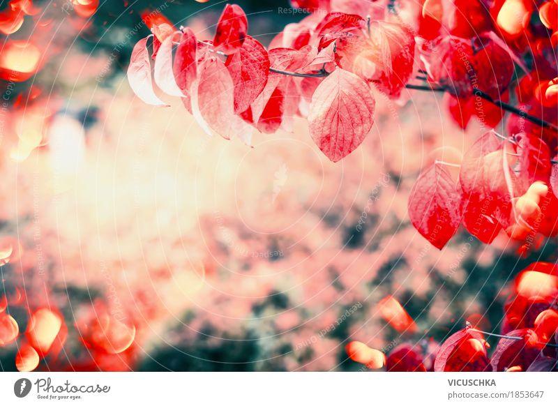 Rote Herbst Blätter im Garten oder Park Design Natur Landschaft Pflanze Sonnenlicht Schönes Wetter Baum Sträucher Blatt gelb Hintergrundbild rot Zweige u. Äste