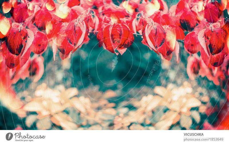 Schöne rote Herbstblätter Lifestyle Stil Design Garten Natur Pflanze Schönes Wetter Baum Sträucher Blatt Park Fahne gelb Hintergrundbild Laubbaum mehrfarbig