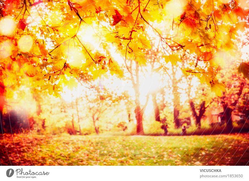Sonniger Herbst Park Lifestyle Design Garten Natur Landschaft Sonnenlicht Schönes Wetter Baum Sträucher Blatt gelb Stimmung herbstlich Herbstlaub Herbstfärbung