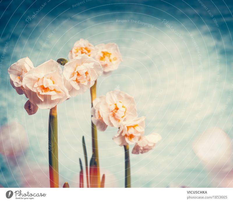 Hübsche Frühling Natur mit Narzissen Himmel Pflanze schön Blume Blatt gelb Blüte Stil Garten Stimmung Design Park Blühend Schönes Wetter
