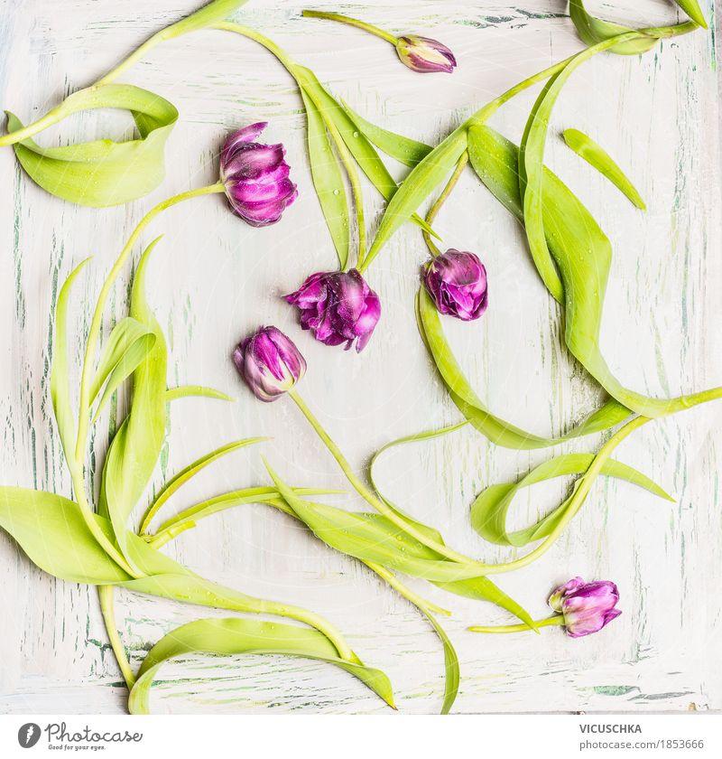 Hübsche lila Tulpen Muster Natur Pflanze Blume Blatt Blüte Liebe Frühling Stil Feste & Feiern Design Dekoration & Verzierung elegant violett Veranstaltung Stillleben Tulpe