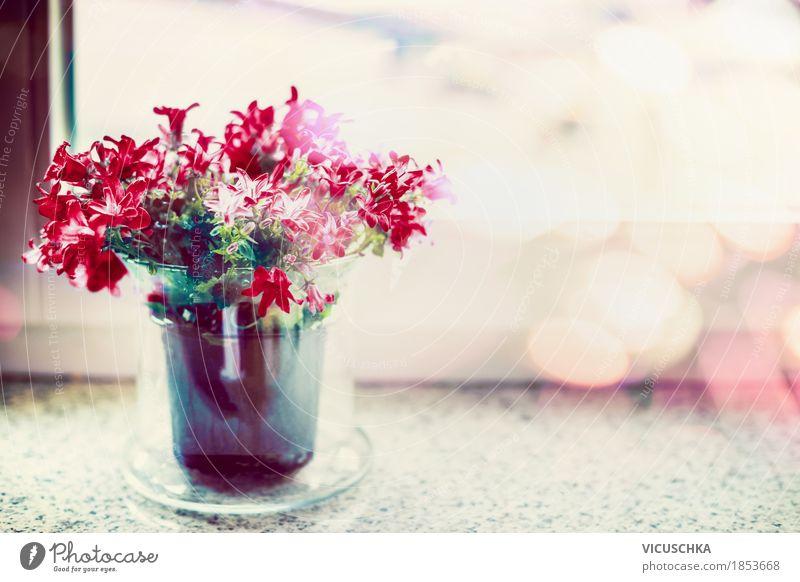 Rote Blumen im Blumentopf am Fenster Natur Pflanze Sommer rot Blatt Haus Blüte Innenarchitektur Lifestyle Stil Stimmung Design Wohnung Häusliches Leben