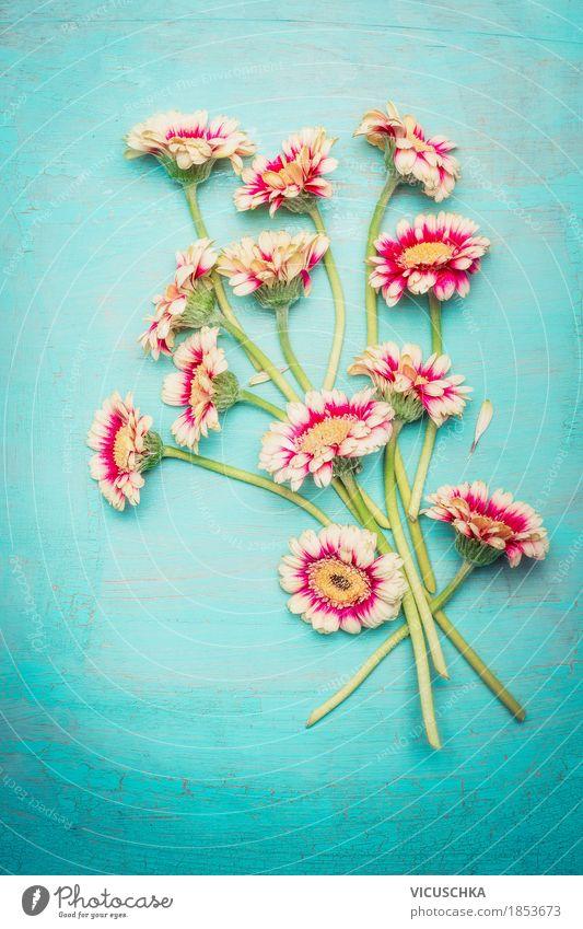 Schöner Blumenstrauß auf blauem Hintergrund Natur Pflanze Sommer Blume Blüte Liebe Frühling Stil Feste & Feiern Stimmung Design rosa Dekoration & Verzierung retro Geburtstag Geschenk