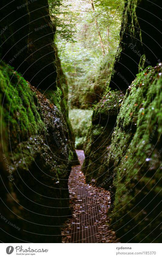 Drachenschlucht Sightseeing Umwelt Natur Landschaft Baum Moos Wald Felsen einzigartig entdecken Erwartung Freiheit geheimnisvoll Idylle Leben nachhaltig