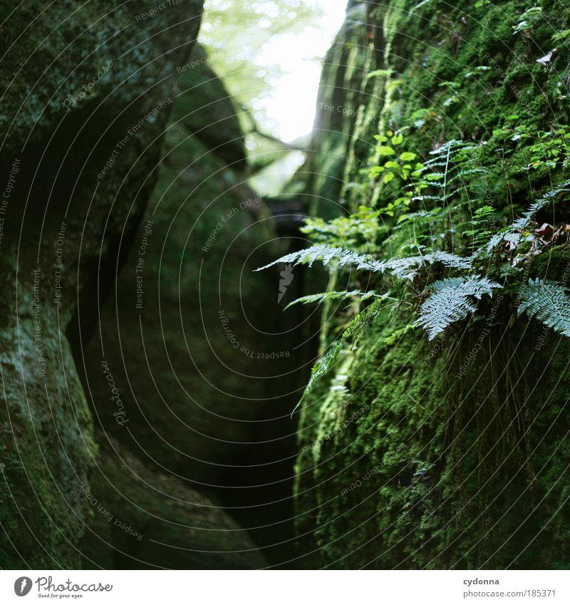 Grün Natur schön ruhig Leben Erholung Freiheit träumen Stein Wege & Pfade Umwelt Zeit Felsen Perspektive Hoffnung Zukunft einzigartig