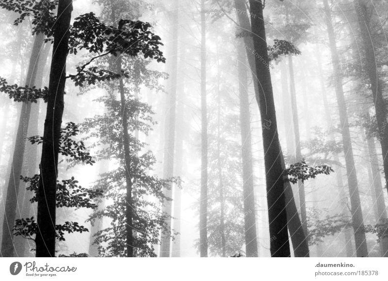 gedankenvisualisierung Natur Landschaft Erde Herbst Nebel Baum Wald alt beobachten berühren Denken entdecken fallen ästhetisch bedrohlich dunkel Gefühle