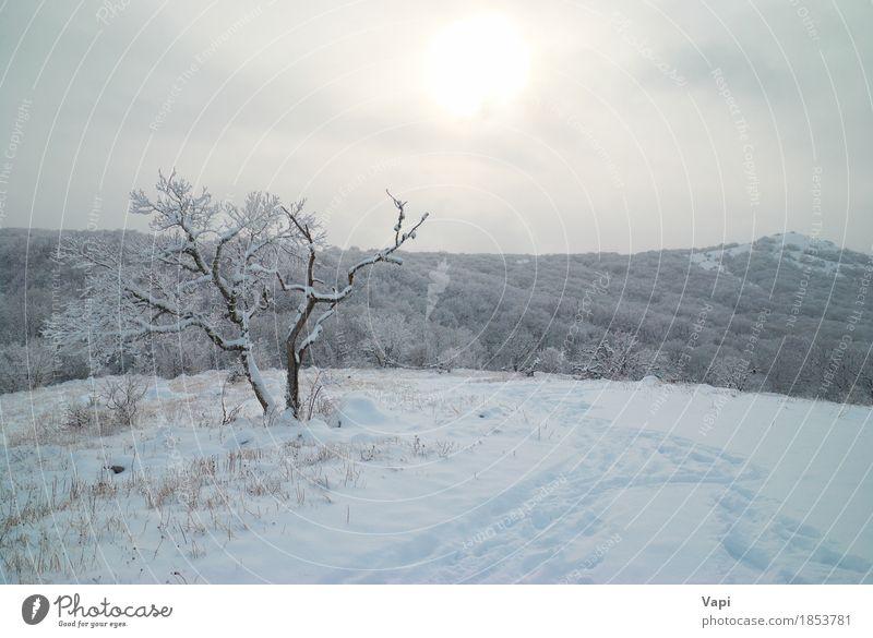 Winterlandschaft- eisiger Wald Himmel Natur Ferien & Urlaub & Reisen blau Weihnachten & Advent Farbe weiß Sonne Baum Landschaft Wolken Berge u. Gebirge Umwelt