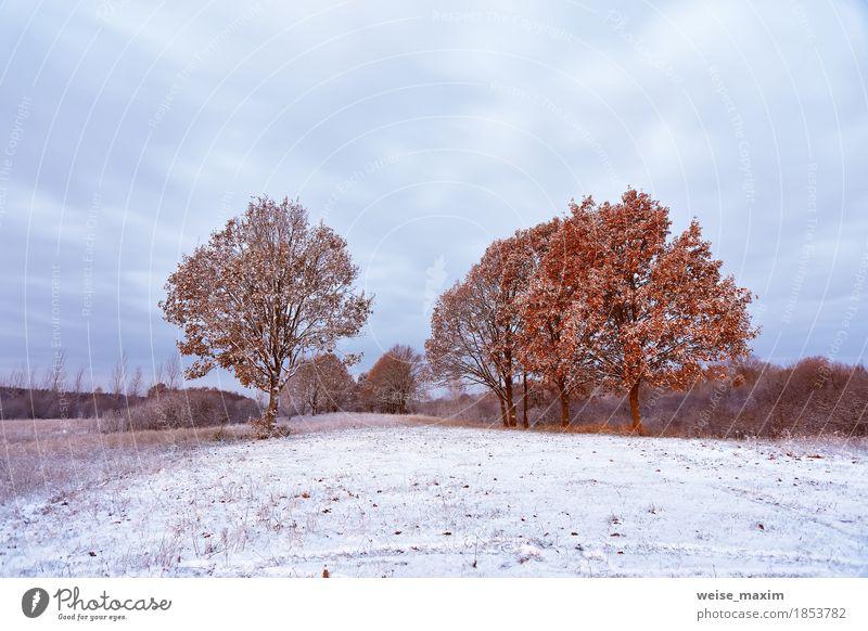 Erster Schnee im Herbstwald. Herbstfarben auf den Bäumen Ferien & Urlaub & Reisen Tourismus Freiheit Winter Umwelt Natur Landschaft Pflanze Wetter Baum Gras