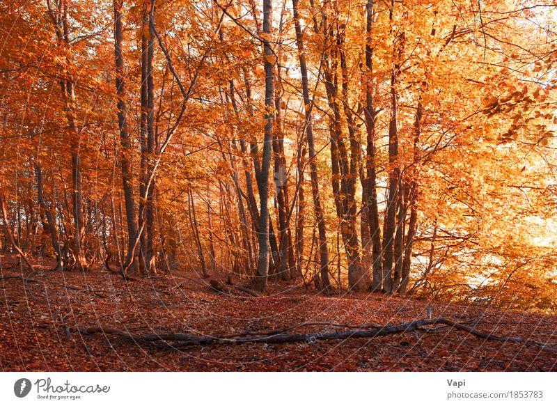 Herbstwald Natur Ferien & Urlaub & Reisen Pflanze Farbe weiß Baum Landschaft rot Blatt Wald Umwelt gelb natürlich Gras braun