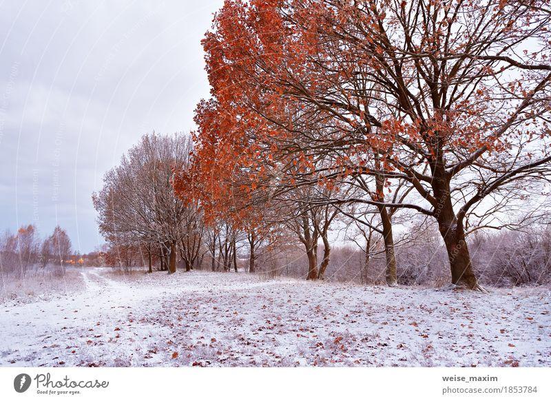 Erster Schnee im Herbstpark. Herbstfarben auf den Bäumen Natur Pflanze weiß Baum Landschaft rot Blatt Winter Wald Umwelt gelb natürlich Gras Freiheit