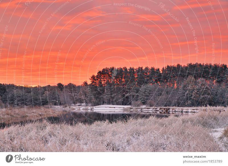 Bunte Herbstdämmerung. Roter Himmel und Wolken. Erster Schnee Natur Ferien & Urlaub & Reisen Pflanze weiß Baum Landschaft rot Winter Wald Umwelt gelb natürlich