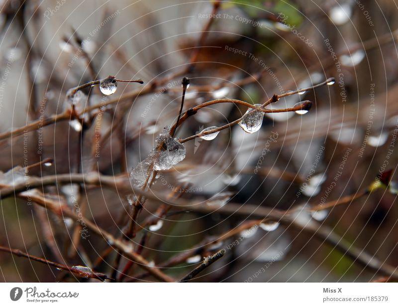 still und leise Umwelt Natur Herbst Winter Klima Klimawandel Wetter schlechtes Wetter Unwetter Regen Eis Frost Schnee Pflanze Baum Sträucher Park glänzend kalt