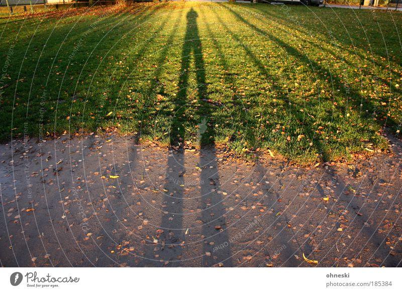 Schattenmann Mensch grün Pflanze Blatt Herbst Wiese Gras Erde Schönes Wetter