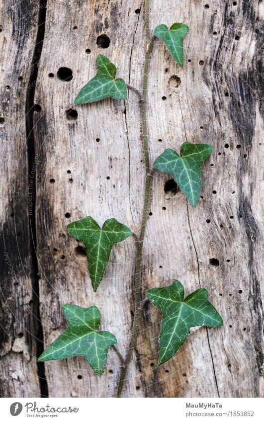Efeu Natur Pflanze Sommer Herbst Klima Klimawandel schlechtes Wetter Nebel Regen Baum Gras Sträucher Blatt Grünpflanze Wildpflanze Garten Park Feld Wald