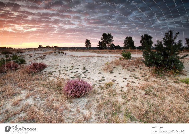 schöner Sonnenaufgang über Sanddünen mit blühender Heide Himmel Natur blau Sommer Landschaft Wolken gelb Herbst Deutschland rosa Aussicht Hügel Düne Kiefer