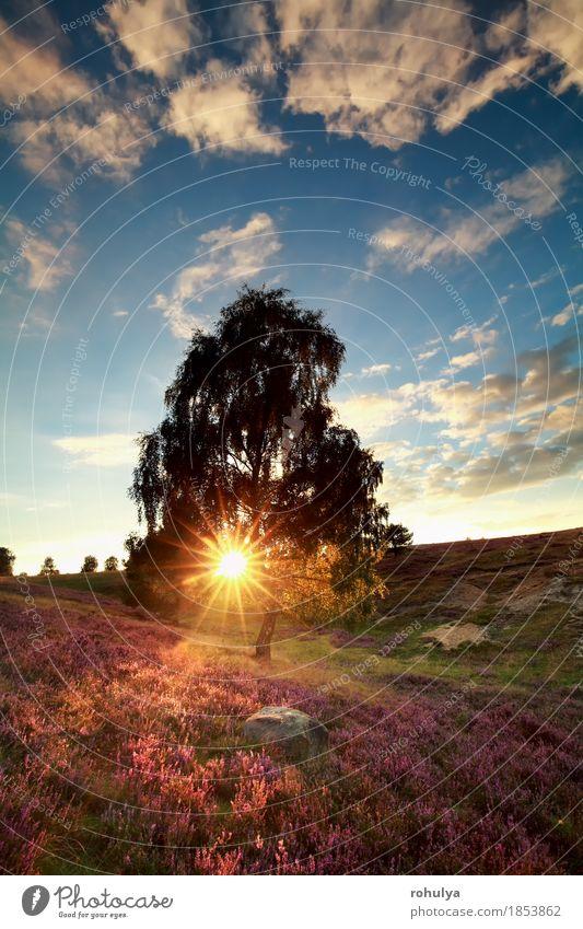 Sonnenstrahlen hinter Birke und Heidekraut Himmel Natur Pflanze blau Sommer Baum Landschaft Blume Wolken Herbst Wiese Deutschland rosa Aussicht Hügel