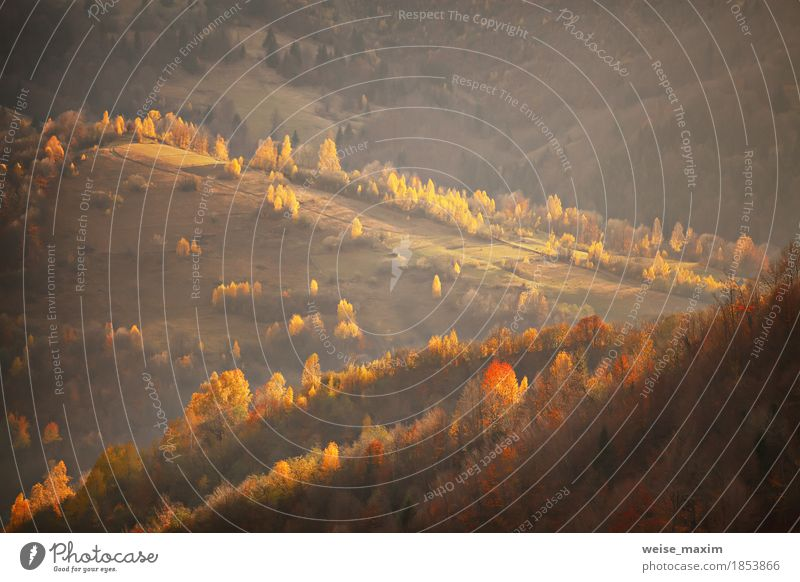 Fall in Berghügeln. Alpine Oktober-Szene Natur Ferien & Urlaub & Reisen Pflanze grün Baum Landschaft rot Haus Ferne Wald Berge u. Gebirge Umwelt gelb