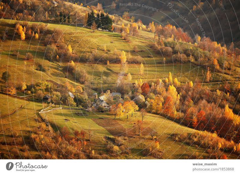 Fall in Bergdorf. Alpine Oktober-Szene. Natur Ferien & Urlaub & Reisen Pflanze grün Baum Landschaft rot Blatt Haus Ferne Wald Berge u. Gebirge Straße Umwelt
