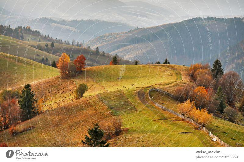 Herbst Bergpanorama. Oktober auf Karpatenhügeln Natur Ferien & Urlaub & Reisen grün Baum Landschaft rot Haus Ferne Wald Berge u. Gebirge Straße Umwelt gelb