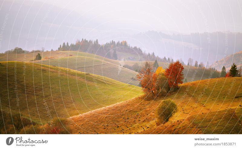 Herbst Bergpanorama. Oktober auf Karpatenhügeln. Fallen Ferien & Urlaub & Reisen Berge u. Gebirge Haus Umwelt Natur Landschaft Luft Schönes Wetter Nebel Baum