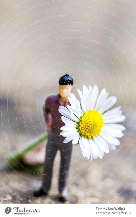Verliebt sein Freude Glück schön Flirten Mädchen Frau Erwachsene Mann Paar Hand Herbst Blume Park Blumenstrauß Lächeln Liebe Fröhlichkeit einzigartig natürlich