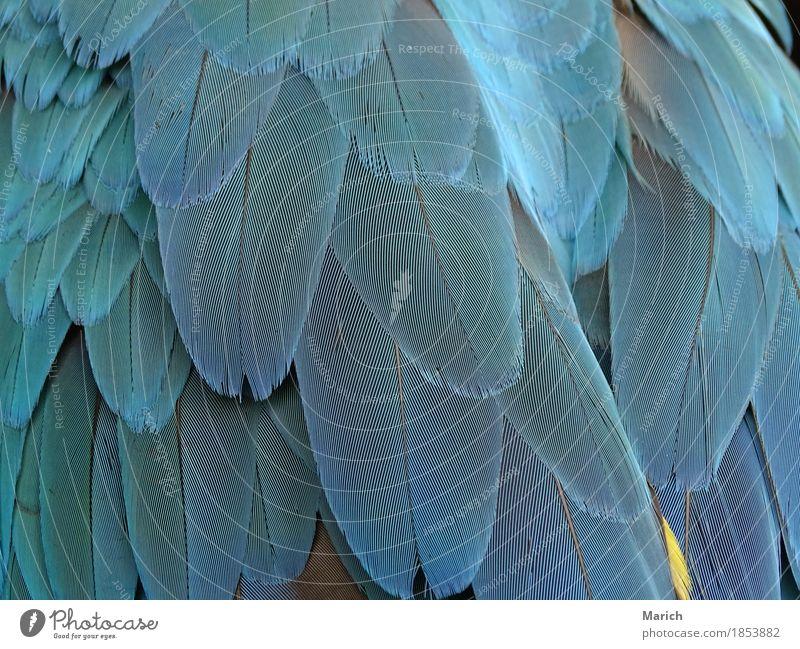 Federn eines Papageien Natur Tier Wildtier Vogel Flügel Zoo elegant exotisch nah blau Tierliebe Inspiration Papageienfedern Papageienvogel Ara Ararauna aracanga