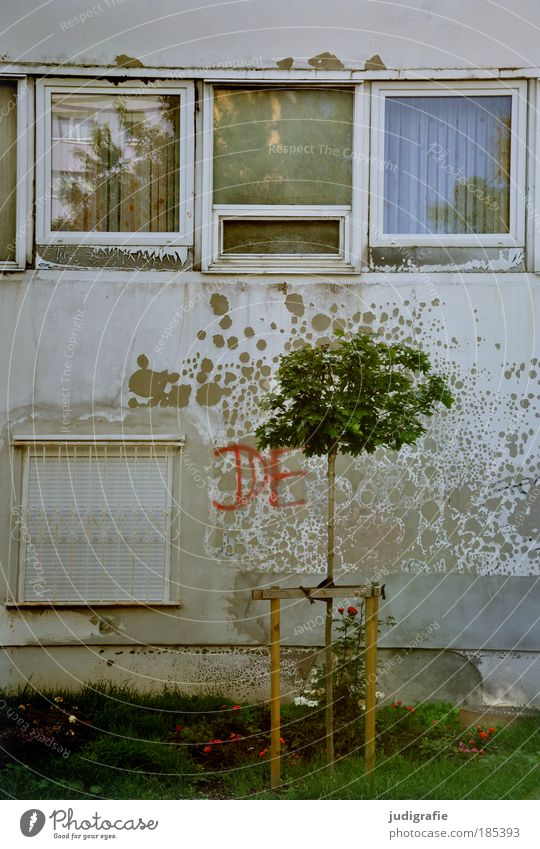 DE Natur Baum Stadt Haus dunkel Wiese Wand Fenster Mauer Gebäude Fassade Hoffnung Wachstum Schriftzeichen Wandel & Veränderung Häusliches Leben
