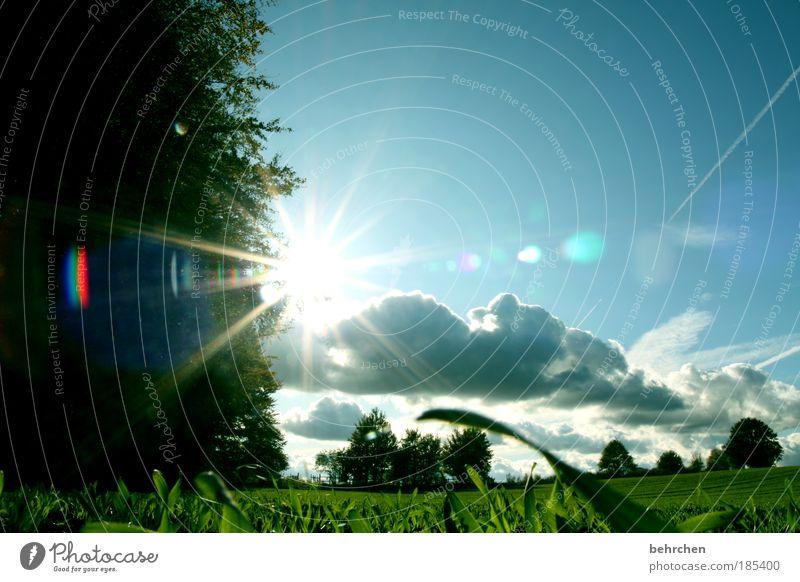 sommerlich(t) Himmel Baum grün Pflanze Sommer Wolken Wald Herbst Sonne Gras Frühling Feld Licht Wachstum gehen Sonnenstrahlen