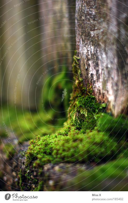 Ohne Moos nix los Natur alt Pflanze Umwelt dunkel kalt Holz Garten Park Fassade Treppe Vergänglichkeit Zaun Verfall Moos kuschlig