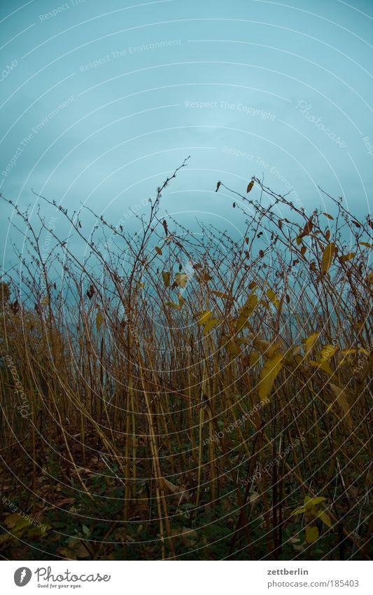 Der Horizont ist schief Meer Pflanze Wolken dunkel Herbst Küste Perspektive Sträucher Ast geheimnisvoll Ostsee Zweig Rügen November Herbstlaub