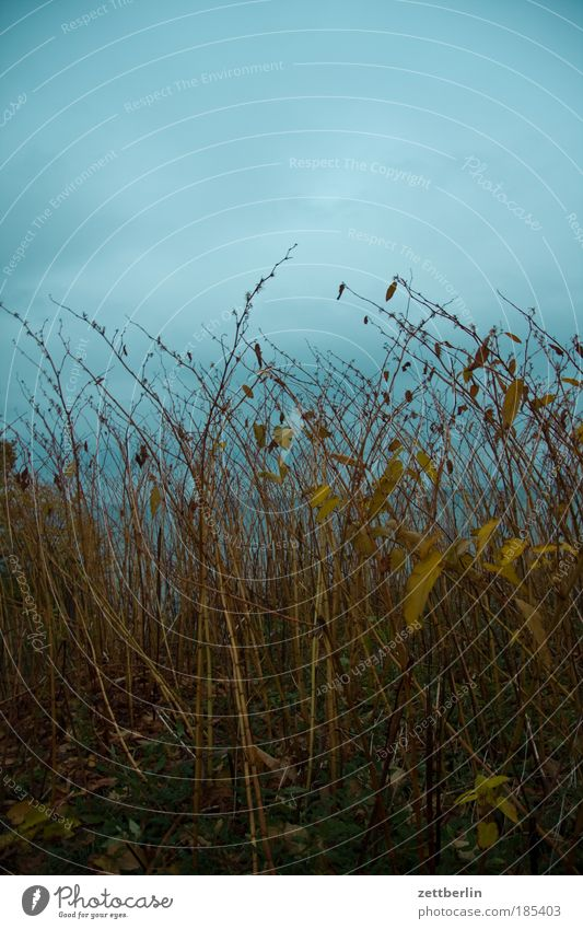 Der Horizont ist schief Meer Pflanze Wolken dunkel Herbst Küste Horizont Perspektive Sträucher Ast geheimnisvoll Ostsee Zweig Rügen November Herbstlaub