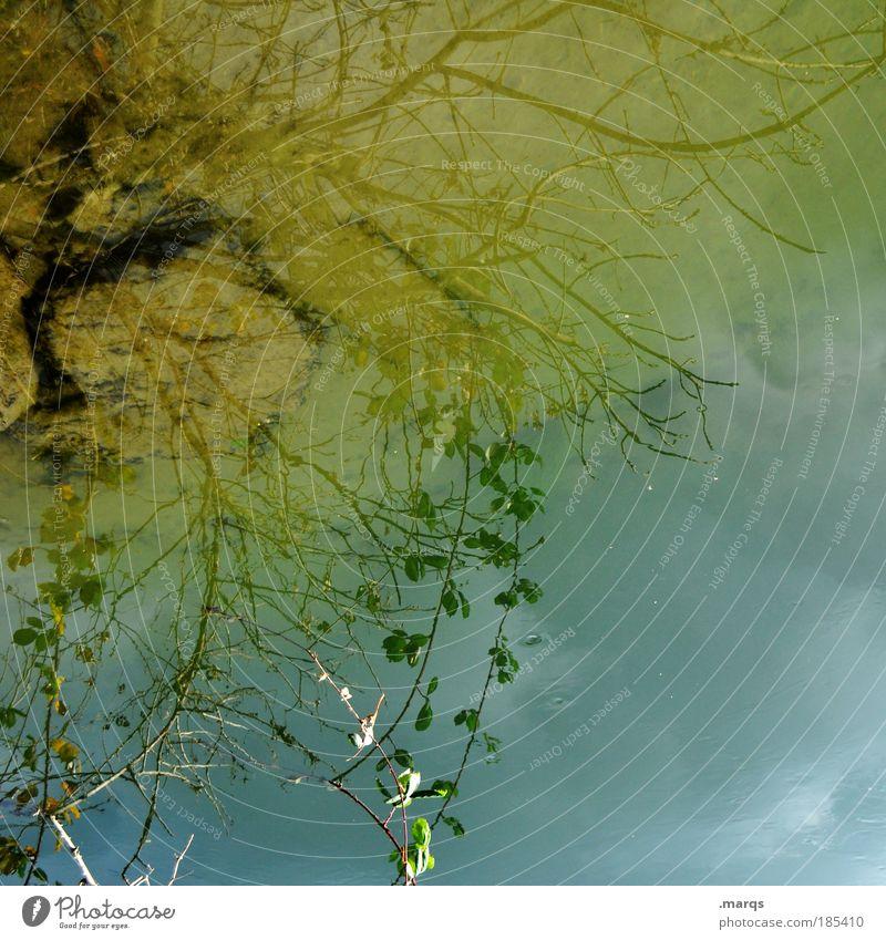 Rhein Stil exotisch Natur Pflanze Urelemente Wasser Himmel Herbst Baum Blatt Zweig leuchten ästhetisch außergewöhnlich Flüssigkeit einzigartig blau gelb Gefühle