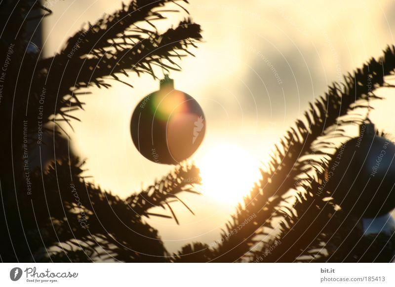 NOEL ALSACIENNE Weihnachten & Advent ruhig gelb träumen Feste & Feiern warten glänzend gold Weihnachtsbaum Kitsch Dekoration & Verzierung Häusliches Leben natürlich Kugel