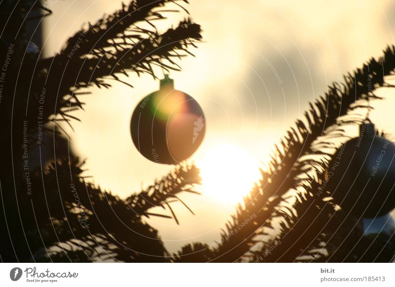 NOEL ALSACIENNE Weihnachten & Advent ruhig gelb träumen Feste & Feiern warten glänzend gold Weihnachtsbaum Kitsch Dekoration & Verzierung Häusliches Leben