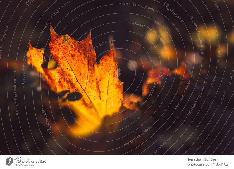 goldener Herbst XII Natur Pflanze rot Blatt Wärme Umwelt gelb Wiese Gras Garten braun Park leuchten ästhetisch