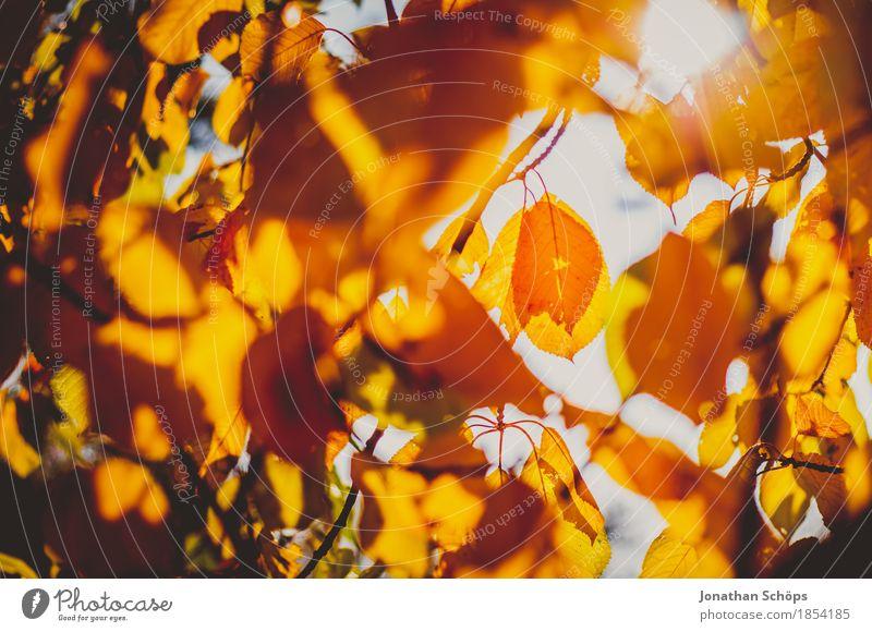 goldener Herbst V Umwelt Natur Schönes Wetter Pflanze Baum See ästhetisch Stimmung Zufriedenheit Lebensfreude einzigartig Erholung Idylle Inspiration