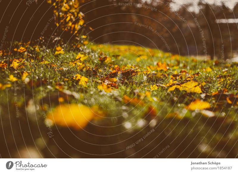 goldener Herbst VII Natur Pflanze rot Blatt Wärme Umwelt gelb Traurigkeit Wiese Gras Garten braun Park ästhetisch