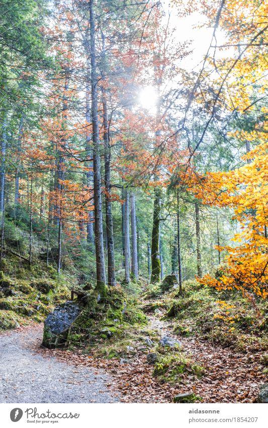 Bayrischer Wald Natur Landschaft Pflanze Herbst Schönes Wetter Baum Alpen achtsam Gelassenheit ruhig Mischwald Blatt Nadelbaum Wege & Pfade Gegenlicht Sonne