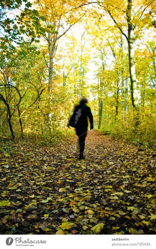 Spazieren Blatt mehrfarbig gold Oktober Herbst herbstlich Jahreszeiten Herbstlaub November plänterwald Mensch Frau laufen Laufsport gehen wandern Rückansicht