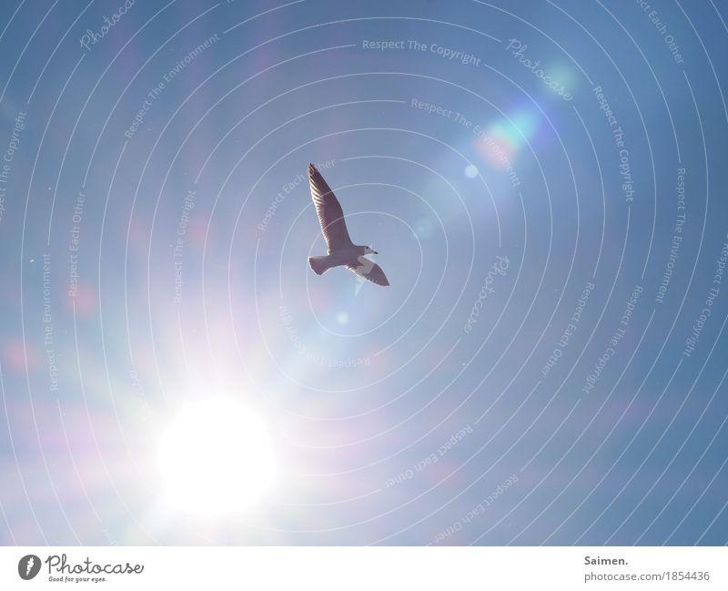 Freiflug Tier Wildtier Vogel Flügel 1 fliegen Möwe Blendenfleck Schweben Blauer Himmel Freiheit unbegrenzt Hoffnung Farbfoto Nahaufnahme Textfreiraum links