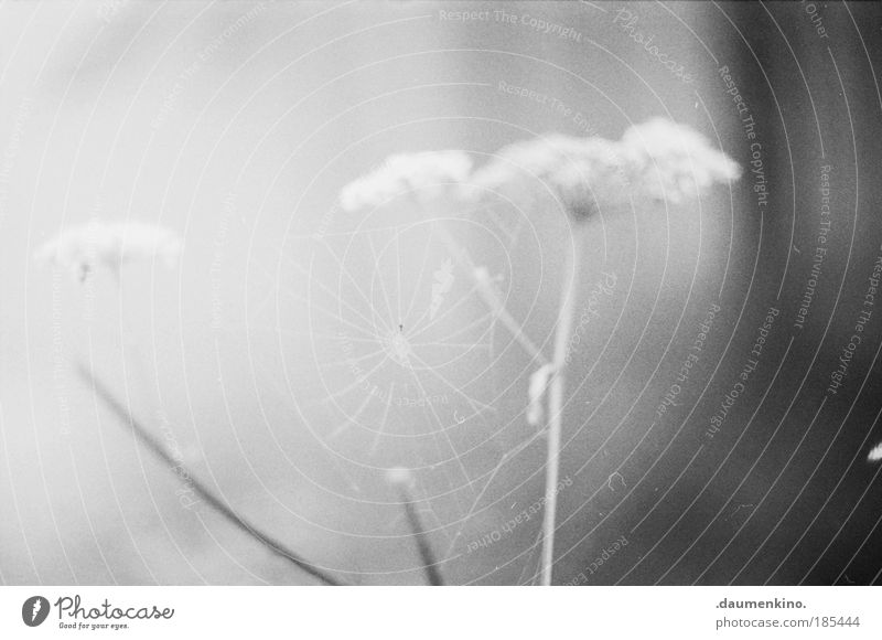 bonjour tristesse Natur Landschaft Herbst Nebel Spinne Netz beobachten berühren entdecken ästhetisch bedrohlich dunkel Gefühle Stimmung Müdigkeit Sehnsucht