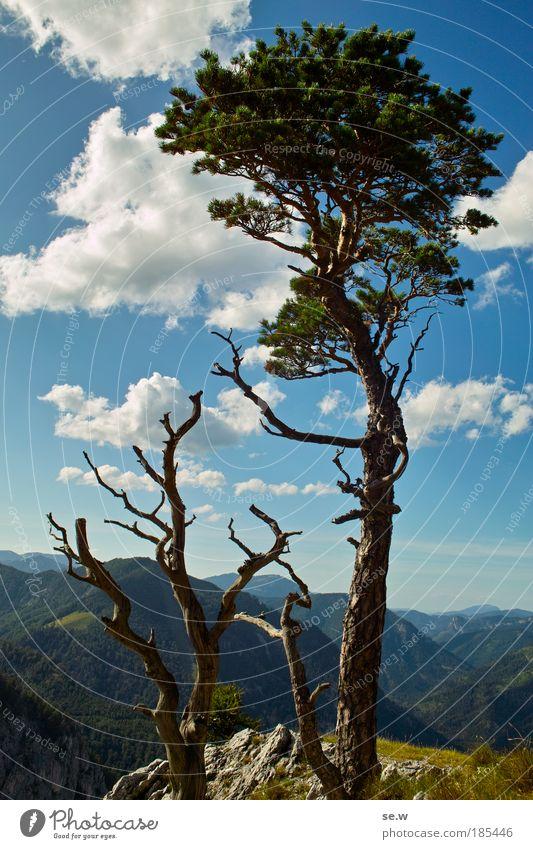Auf der Rax Natur Baum Freude Sommer Wolken hell Tourismus Fröhlichkeit Urelemente Kitsch Alpen Neugier Aussicht Berge u. Gebirge Schönes Wetter Blauer Himmel