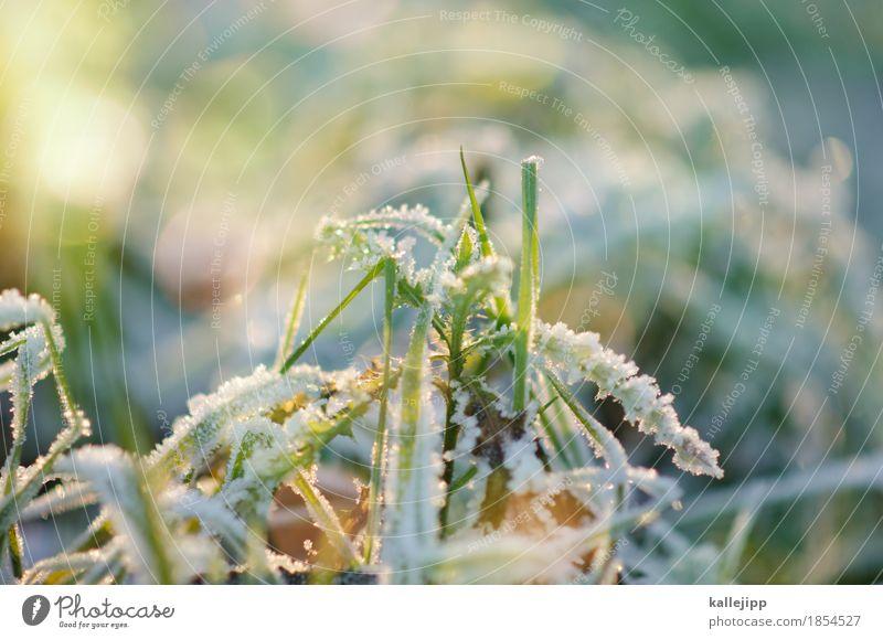 rau und reif Umwelt Natur Landschaft Pflanze Luft Wassertropfen Herbst Winter Klima Schönes Wetter Eis Frost Gras Sträucher kalt Raureif Gegenlicht Eiskristall