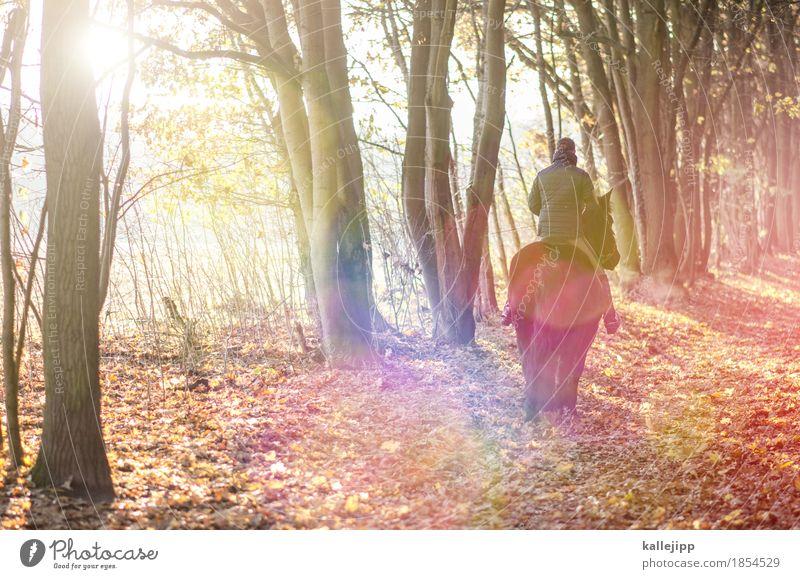 am waldesrand Mensch Natur Baum Landschaft Tier Freude Ferne Wald Erwachsene Umwelt Herbst Sport Freiheit maskulin Freizeit & Hobby Wetter